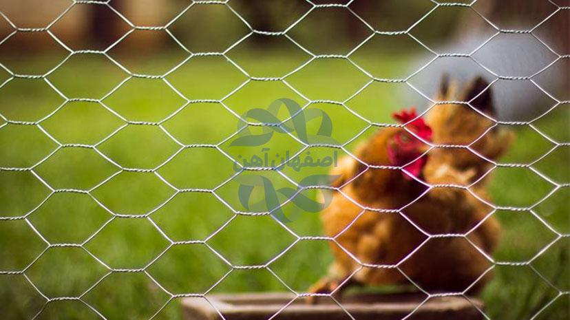 کاربرد-توری-مرغی